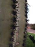 Κινηματογράφηση σε πρώτο πλάνο των αγκαθιών κάκτων Saguaro Στοκ Εικόνα