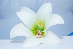 Κινηματογράφηση σε πρώτο πλάνο των γαμήλιων δαχτυλιδιών στο υπόβαθρο του γαμήλιου δαχτυλιδιού λουλουδιών γαμήλιο λευκό δαχτυλιδιώ Στοκ Εικόνες