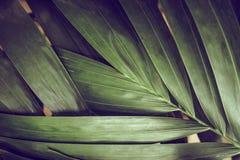 Κινηματογράφηση σε πρώτο πλάνο των λεπτομερών φύλλων ζουγκλών τροπικών δασών για το υπόβαθρο Στοκ Εικόνες