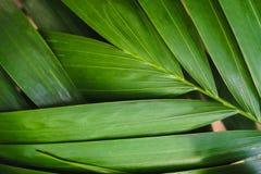 Κινηματογράφηση σε πρώτο πλάνο των λεπτομερών φύλλων ζουγκλών τροπικών δασών για το υπόβαθρο Στοκ εικόνα με δικαίωμα ελεύθερης χρήσης