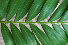 Κινηματογράφηση σε πρώτο πλάνο των λεπτομερών φύλλων ζουγκλών τροπικών δασών για το υπόβαθρο Στοκ Φωτογραφία