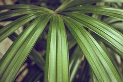 Κινηματογράφηση σε πρώτο πλάνο των λεπτομερών φύλλων ζουγκλών τροπικών δασών για το υπόβαθρο Στοκ φωτογραφία με δικαίωμα ελεύθερης χρήσης