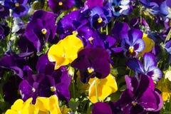 Κινηματογράφηση σε πρώτο πλάνο των ζωηρόχρωμων θερινών λουλουδιών στο έδαφος Στοκ εικόνα με δικαίωμα ελεύθερης χρήσης