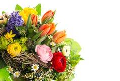 Κινηματογράφηση σε πρώτο πλάνο των ζωηρόχρωμων λουλουδιών άνοιξη Στοκ Εικόνες