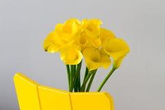 Κινηματογράφηση σε πρώτο πλάνο των κίτρινων calla κρίνων Στοκ Φωτογραφία