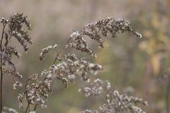 Κινηματογράφηση σε πρώτο πλάνο των καφετιών εγκαταστάσεων το φθινόπωρο στη δασική κονσέρβα Στοκ Εικόνες