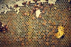 Κινηματογράφηση σε πρώτο πλάνο των κηρηθρών με τις μέλισσες Στοκ φωτογραφίες με δικαίωμα ελεύθερης χρήσης