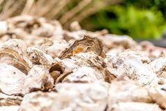 Κινηματογράφηση σε πρώτο πλάνο των κοχυλιών στρειδιών για το γευματίζοντα στη φύση στοκ φωτογραφία με δικαίωμα ελεύθερης χρήσης