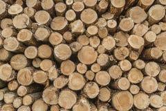 Κινηματογράφηση σε πρώτο πλάνο των κούτσουρων των δέντρων στη φύση Στοκ Εικόνα