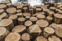 Κινηματογράφηση σε πρώτο πλάνο των κούτσουρων των δέντρων στη φύση Στοκ φωτογραφία με δικαίωμα ελεύθερης χρήσης