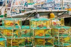 Κινηματογράφηση σε πρώτο πλάνο των μεγάλων κίτρινων και μπλε κλουβιών καβουριών Στοκ εικόνα με δικαίωμα ελεύθερης χρήσης