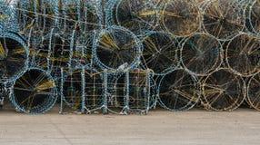 Κινηματογράφηση σε πρώτο πλάνο των μεγάλων κλουβιών καβουριών Στοκ φωτογραφία με δικαίωμα ελεύθερης χρήσης