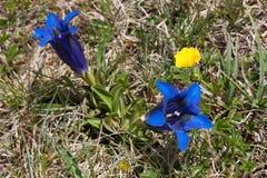 κινηματογράφηση σε πρώτο πλάνο των μπλε λουλουδιών σε ένα λιβάδι Στοκ Εικόνα