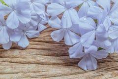 Κινηματογράφηση σε πρώτο πλάνο των μπλε λουλουδιών plumbago στο ξύλινο υπόβαθρο Στοκ εικόνα με δικαίωμα ελεύθερης χρήσης
