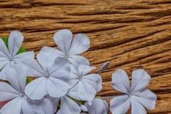 Κινηματογράφηση σε πρώτο πλάνο των μπλε λουλουδιών plumbago στο ξύλινο υπόβαθρο Στοκ Εικόνες