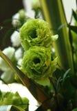 Κινηματογράφηση σε πρώτο πλάνο των λουλουδιών στοκ φωτογραφία με δικαίωμα ελεύθερης χρήσης