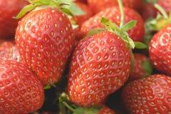 Κινηματογράφηση σε πρώτο πλάνο φραουλών κήπων Στοκ Εικόνες
