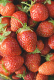 Κινηματογράφηση σε πρώτο πλάνο φραουλών κήπων Στοκ Φωτογραφίες
