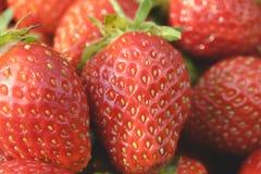 Κινηματογράφηση σε πρώτο πλάνο φραουλών κήπων Στοκ φωτογραφία με δικαίωμα ελεύθερης χρήσης