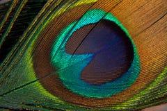 Κινηματογράφηση σε πρώτο πλάνο φτερών Peacock Στοκ φωτογραφίες με δικαίωμα ελεύθερης χρήσης