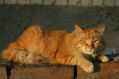 Κινηματογράφηση σε πρώτο πλάνο, φωτογραφία της κοκκινομάλλους γάτας με τα πράσινα μάτια που φαίνονται ευθέα προς τη κάμερα Στοκ Φωτογραφίες