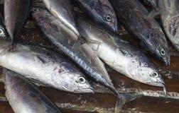 Κινηματογράφηση σε πρώτο πλάνο ψαριών θάλασσας στην αγορά θαλασσινών Τα φρέσκα ψάρια θάλασσας για πωλούν Στοκ Φωτογραφίες