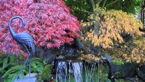Κινηματογράφος των δεμένων δέντρων σφενδάμνου πέρα από την πηγή νερού στην εποχή 1080p HD πτώσης κήπων απόθεμα βίντεο