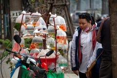 Κινητό κατάστημα Ανόι Ασία καταστημάτων κατοικίδιων ζώων Στοκ φωτογραφία με δικαίωμα ελεύθερης χρήσης