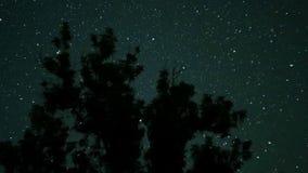 Κινούμενα αστέρια στο νυχτερινό ουρανό πέρα από τα δέντρα Χρονικό σφάλμα απόθεμα βίντεο