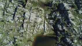 Κινούμενα γενικά έξοδα επάνω από το βαλτώδες δάσος ξύλων λιμνών και πεύκων στην ηλιόλουστη θερινή ημέρα Υπαίθρια πράσινη φύση Άλπ απόθεμα βίντεο