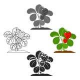Κινούμενα σχέδια εικονιδίων φραουλών, μαύρα Ενιαίο εικονίδιο εγκαταστάσεων από το μεγάλο αγρόκτημα, κήπος, κινούμενα σχέδια γεωργ ελεύθερη απεικόνιση δικαιώματος