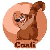 Κινούμενα σχέδια Coati ABC Στοκ Φωτογραφίες