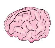 κινούμενα σχέδια εγκεφάλου Στοκ Εικόνες