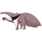Κινούμενα σχέδια που χαμογελούν Anteater ελεύθερη απεικόνιση δικαιώματος