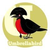 Κινούμενα σχέδια Umbrellabird ABC Ελεύθερη απεικόνιση δικαιώματος