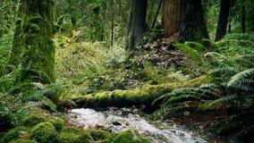 Κινώντας τον προηγούμενο ποταμό βαθιά στα ξύλα φιλμ μικρού μήκους