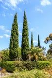Κιονοειδή δέντρα λευκών στην πανεπιστημιούπολη του Πανεπιστημίου της Καλιφόρνιας, Σαν Ντιέγκο UCSD Στοκ εικόνα με δικαίωμα ελεύθερης χρήσης