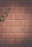 Κισσός στο brickwall Στοκ Φωτογραφία