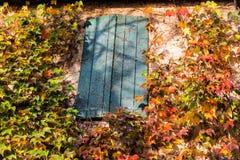 Κισσός της Βοστώνης και παλαιό παράθυρο Στοκ Εικόνες