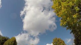 Κιτρινίζοντας δέντρα σφενδάμνου, 4K χρονικό σφάλμα απόθεμα βίντεο