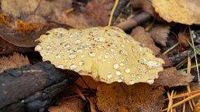 Κιτρινίζοντας φύλλα Στοκ Εικόνες