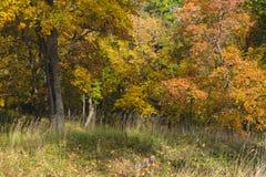 Κιτρινισμένα δέντρα στη δασική σκηνή φθινοπώρου φθινοπώρου δασική στοκ φωτογραφίες με δικαίωμα ελεύθερης χρήσης