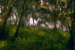 Κιτρινοπράσινο δάσος της Misty στο τοπίο βουνών Στοκ Φωτογραφίες