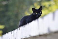 Κιτρινωπή πράσινη γάτα ματιών Στοκ φωτογραφία με δικαίωμα ελεύθερης χρήσης