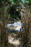 Κιόσκι από το bowerbird Στοκ Φωτογραφίες