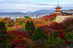 Κιότο, Ιαπωνία - 25 Νοεμβρίου 2016 - το όμορφο φθινόπωρο γ Momiji Στοκ φωτογραφία με δικαίωμα ελεύθερης χρήσης