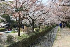 Κιότο, Ιαπωνία σε Philosopher& x27 περίπατος του s στην άνοιξη Στοκ Εικόνα