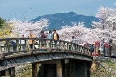 Άνοιξη στην Ιαπωνία Στοκ φωτογραφία με δικαίωμα ελεύθερης χρήσης