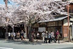 Άνοιξη στην Ιαπωνία Στοκ Εικόνες