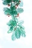Κλάδοι δέντρων ανασκόπησης. Στοκ εικόνα με δικαίωμα ελεύθερης χρήσης